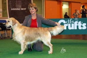 Spook at nearly three years of age ~ Crufts 2010