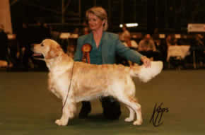 Champion Xanthos Black Thorn JW crufts