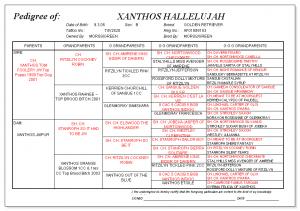 Xanthos Hallelujah pedigree