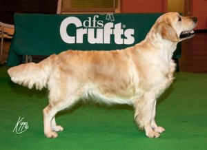 Dallas aged two having just won mid limit bitch at Crufts 2010