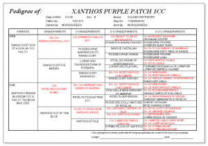 Xanthos Purple Patch pedigree