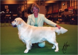 Champion Xanthos Tom Foolery JW at Crufts