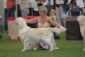 Dutch just coming back into coat Bath Championship Show 2012