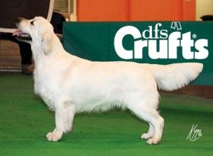 Dutch aged 17 months (and beginning to fill his frame) having just won his class at Crufts 2010