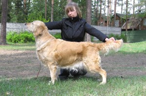 Champion Xanthos Orinoco stacked 5yrs