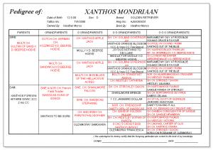 Xanthos Mondriaan pedigree